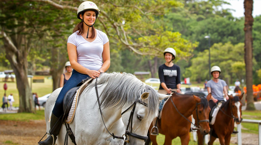 How To Start Your Own Horse Riding School From The Ground Up